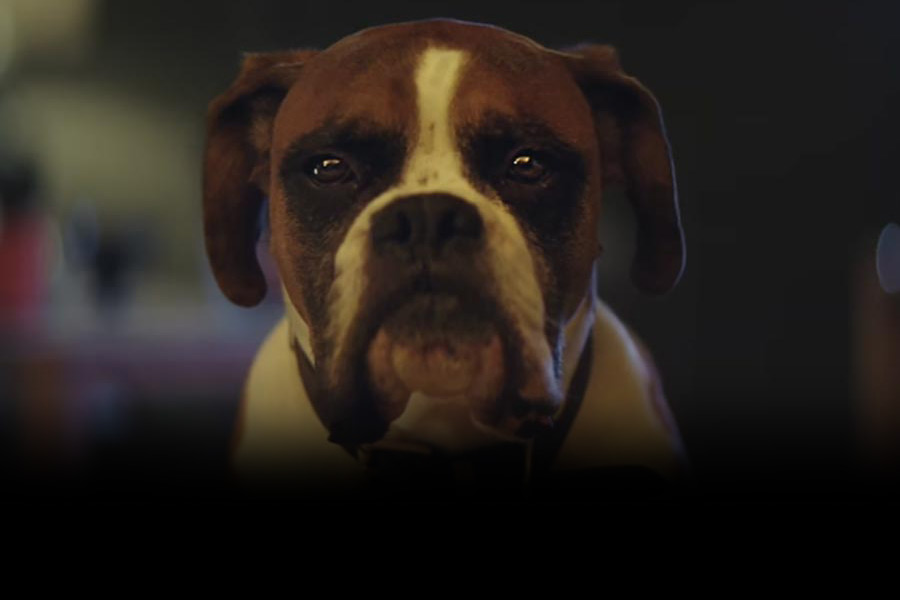 New John Lewis Christmas Advert 2016 'Buster the Boxer' highlights best practice for employee benefits
