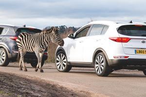 Kia Motors trains staff at a safari park