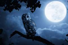 Dr Employer: Getting the best out of early birds & night owls